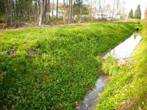 Exemple de fossé qui avait une pente trop forte et une longueur telle que la pente du fond du fossé a dû être ramenée à 0°, avec des seuils.  La végétalisation des talus, immédiatement après l'excavation, avec des mélanges d'herbacés indigènes bien choisis, donne des bons résultats.