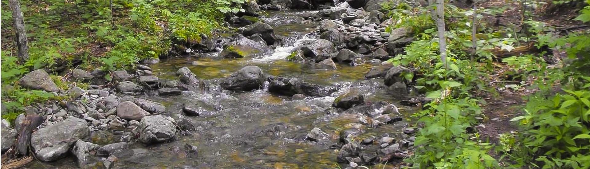 ruisseau FSC_